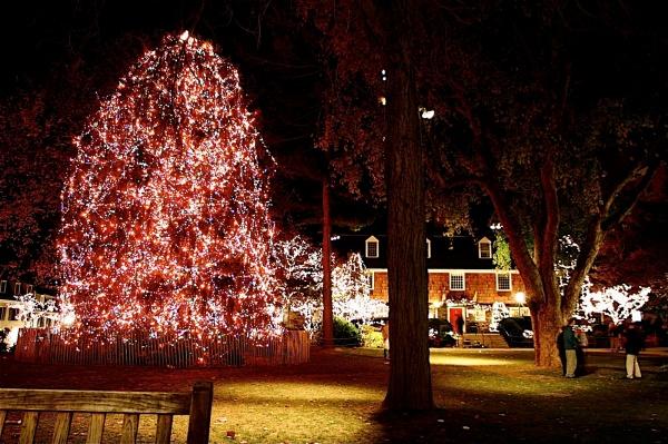 Princeton Christmas Tree